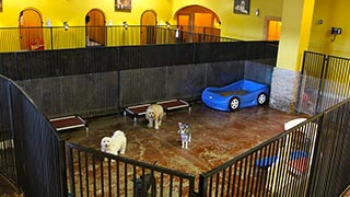 Dog-Daycare-at-Las-Vegas-Dog-Resort