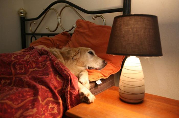 las-vegas-dog-hotel-guest