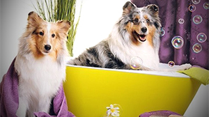 Pet Spa Services at Las Vegas Dog Resort