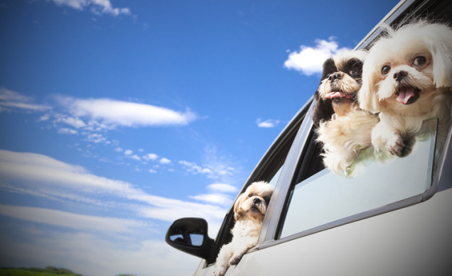 Traveling Dogs