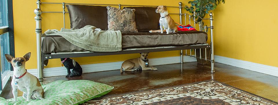 Long Term Dog Boarding Amenities