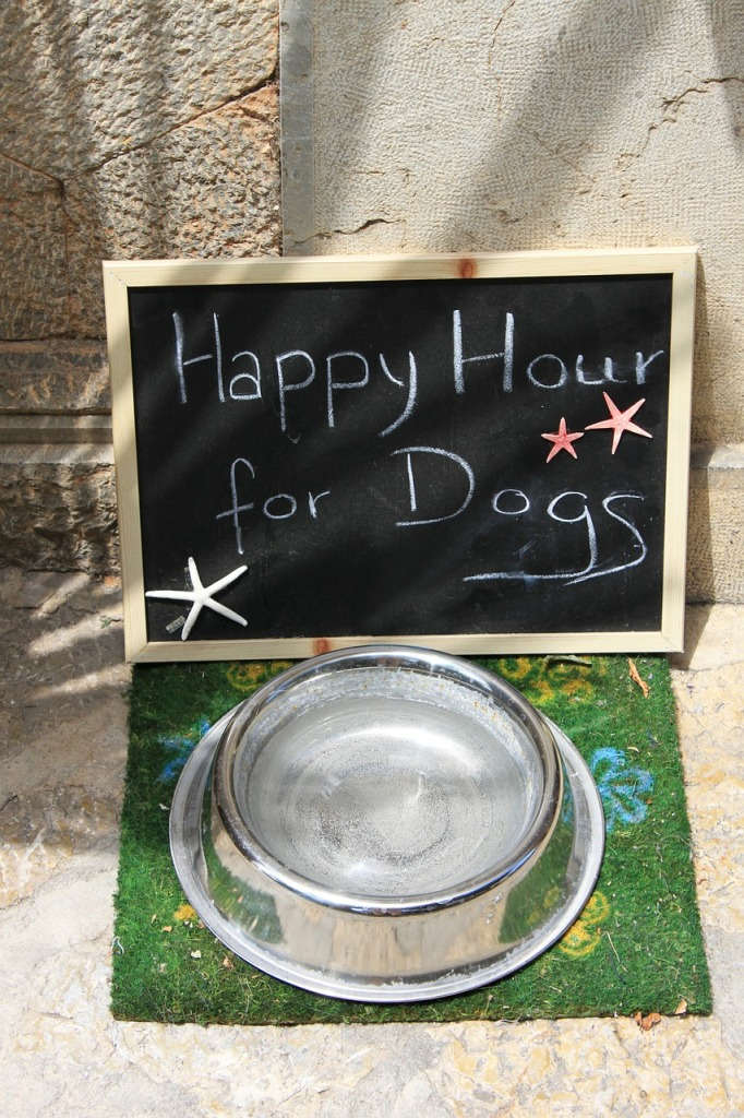 happy hour for dogs at boarding facility